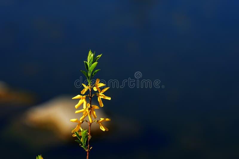 Folhas amarelas e folhas verdes da mesma árvore imagem de stock royalty free