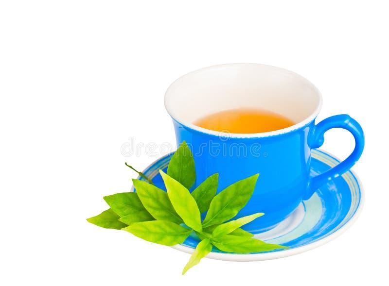 Folhas azuis do copo e do verde de chá isoladas no branco imagem de stock royalty free