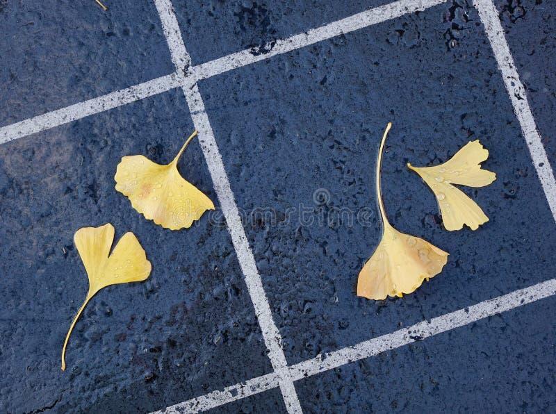 Folhas bonitas da nogueira-do-Japão do outono fotos de stock royalty free