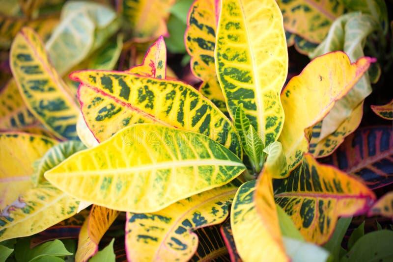 Folhas bonitas da planta no verão foto de stock