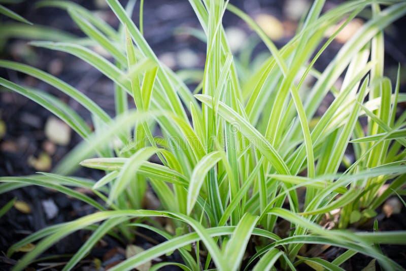 Folhas bonitas da planta no verão fotografia de stock royalty free