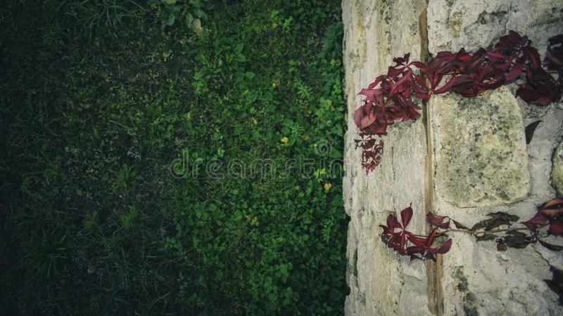 Folhas bonitas da queda foto de stock royalty free