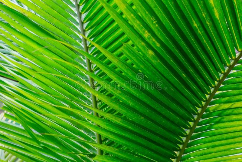 Folhas bonitas do verde como o fundo imagens de stock