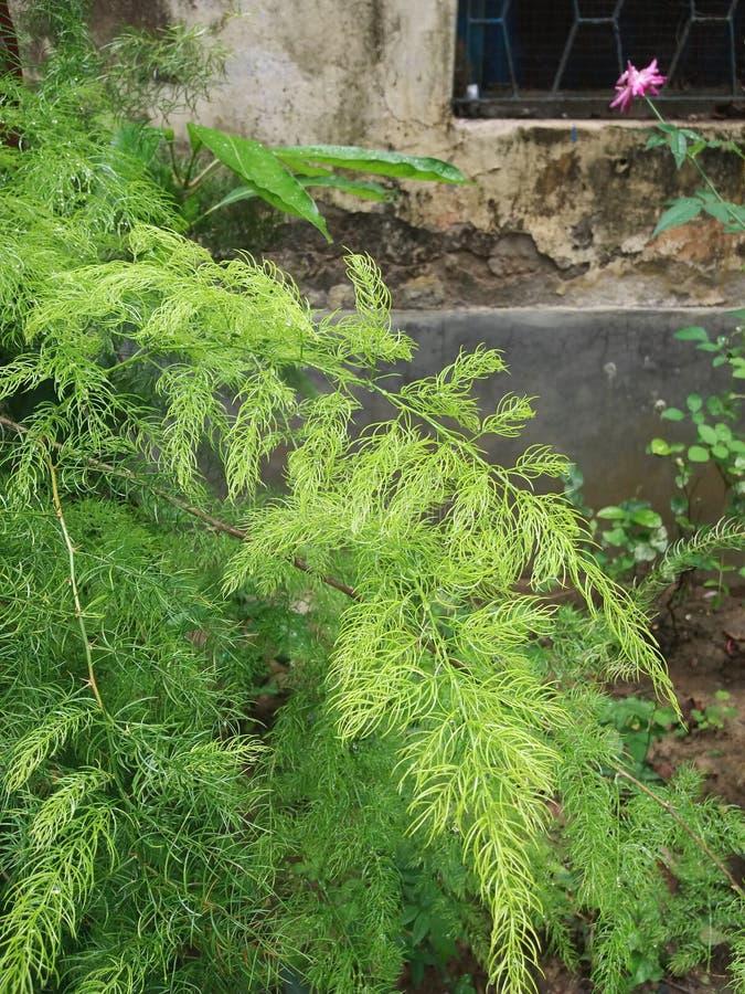 Folhas bonitas do verde em exterior imagens de stock