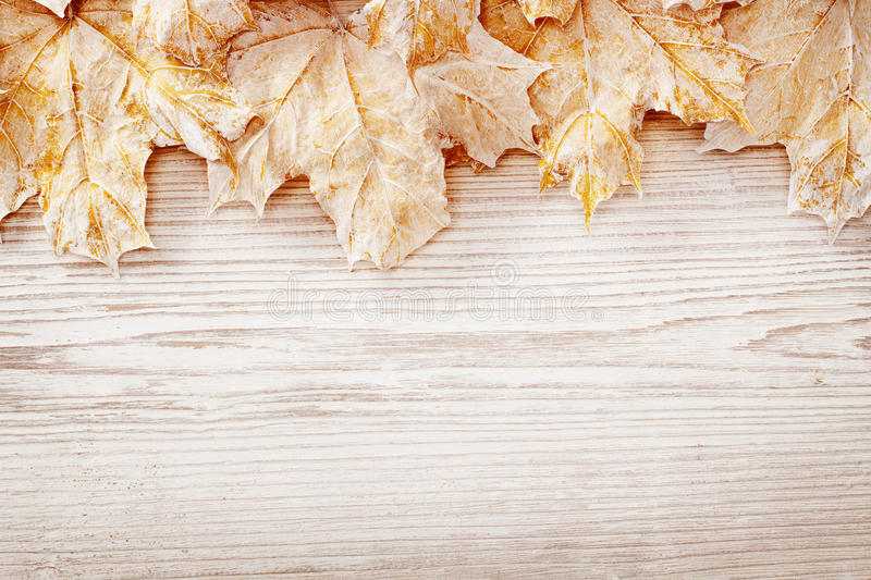Folhas brancas do fundo de madeira, Autumn Wooden Grain Board Texture foto de stock royalty free