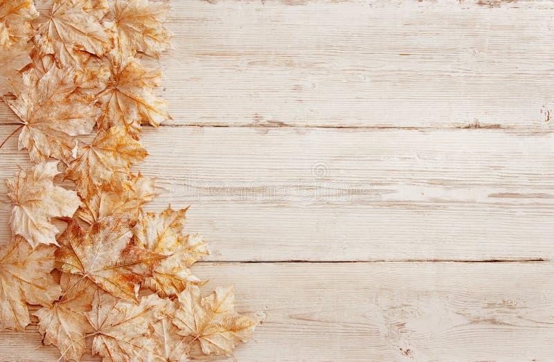 Folhas brancas do fundo de madeira, textura de madeira da grão, folha da prancha imagem de stock royalty free