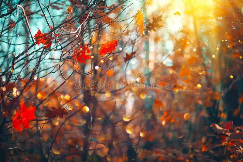 Folhas brilhantes coloridas do outono que balançam em um carvalho no parque outonal Fundo da queda imagem de stock