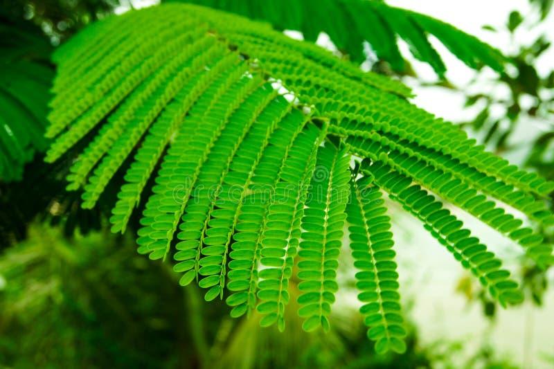 Folhas brilhantes da samambaia imagem de stock