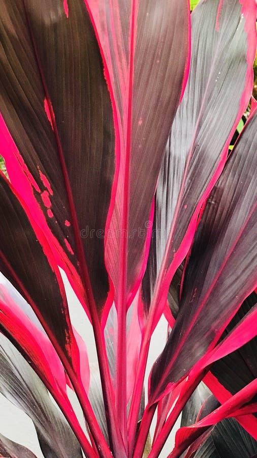 Folhas brilhantes do vermelho imagens de stock royalty free