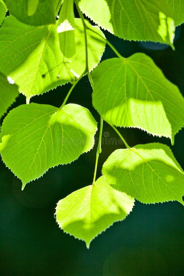 Folhas brilhantes, fundo escuro imagem de stock