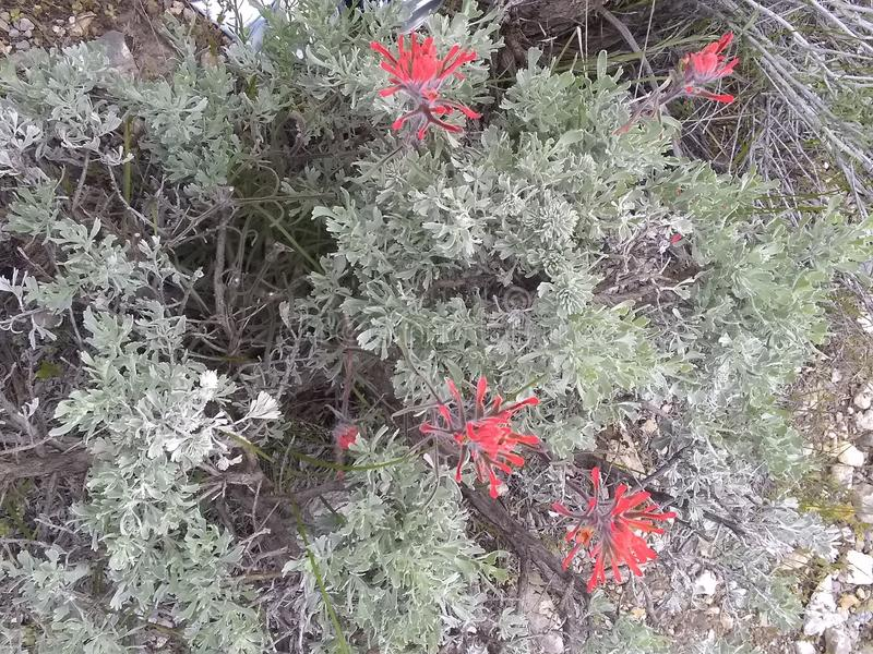 Folhas c do verde do pincel indiano fotos de stock