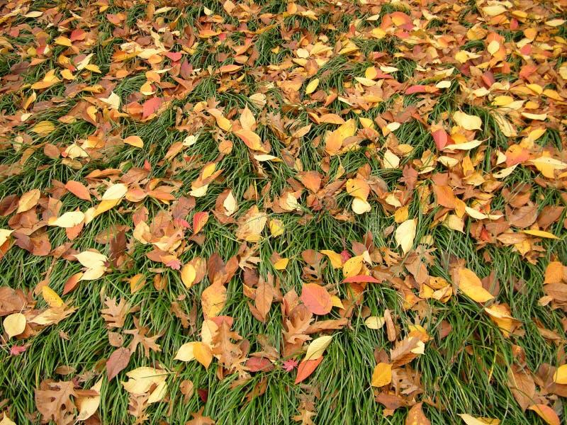 Folhas caídas imagens de stock