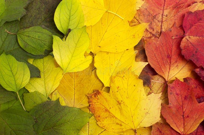 Folhas caídas bonitas foto de stock royalty free