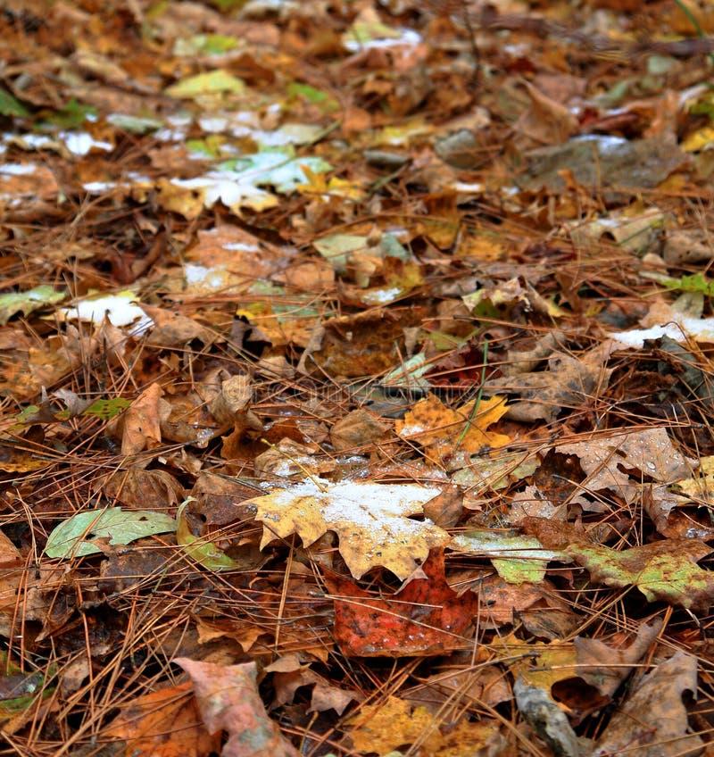 Folhas caídas com neve em um assoalho da floresta foto de stock