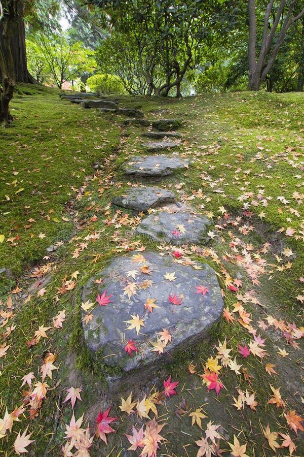 Folhas caídas da árvore de bordo nas etapas de pedra e no musgo foto de stock royalty free