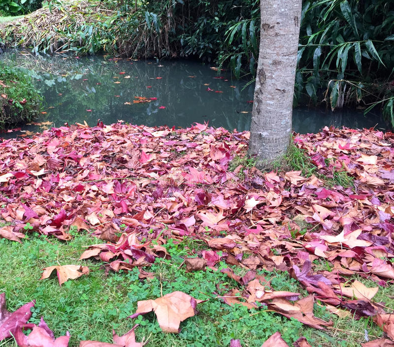 Folhas caídas do vermelho e do rosa foto de stock