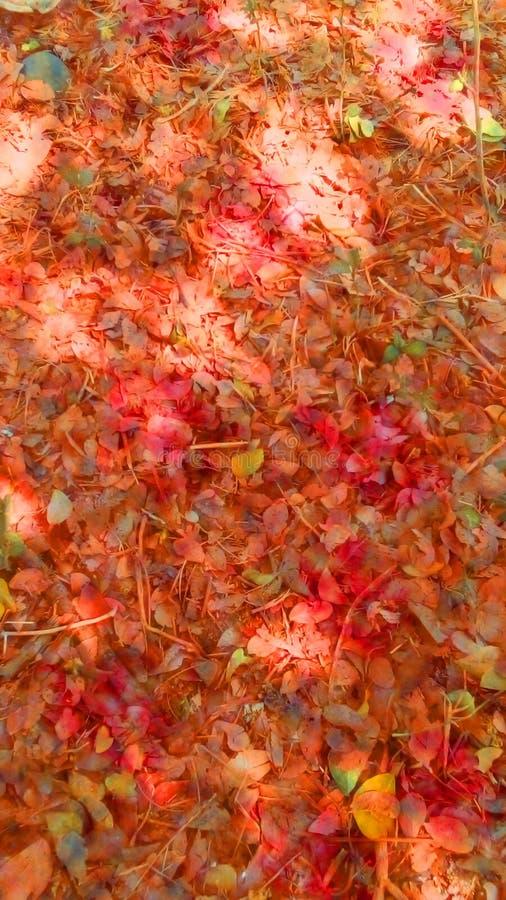 Folhas caídas durante o outono fotos de stock