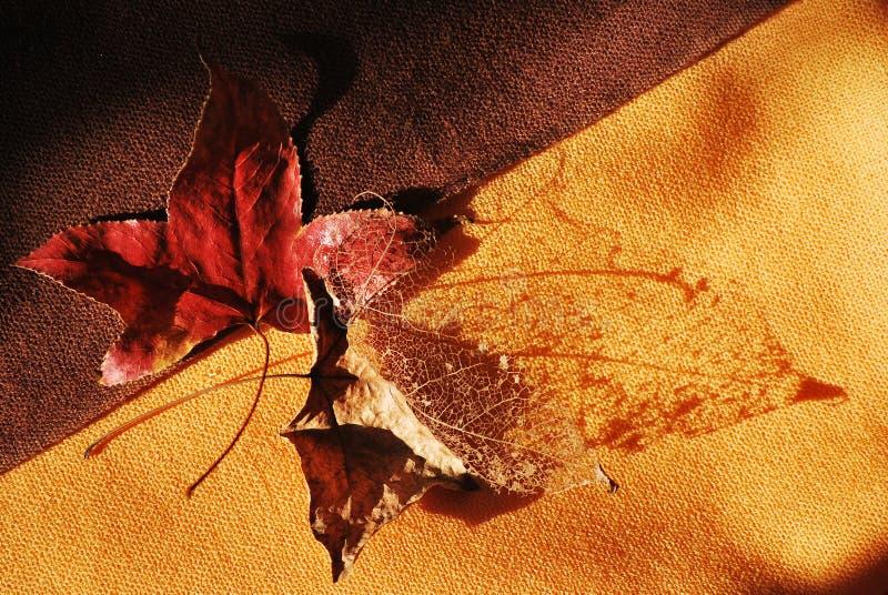 Folhas caídas em Autum imagem de stock royalty free