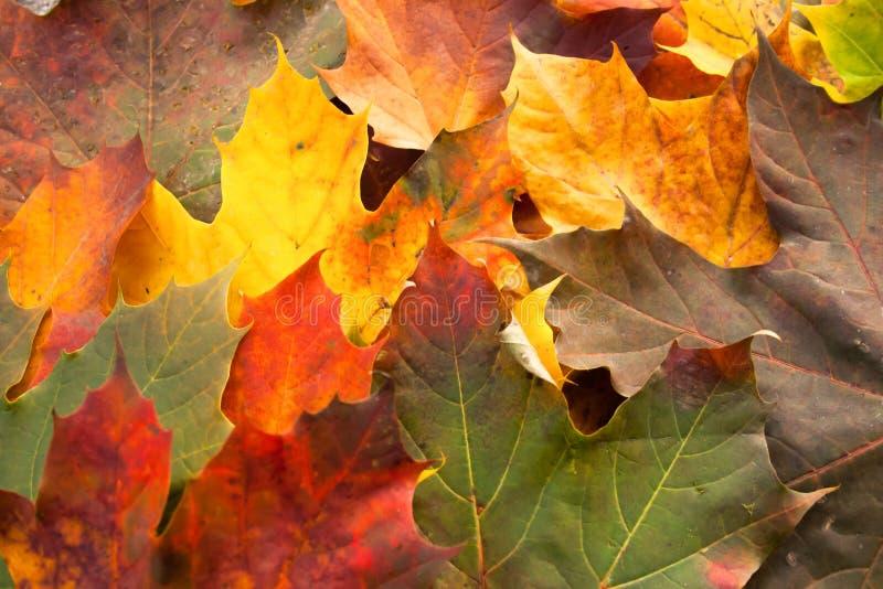 Folhas caídas em Autum imagens de stock royalty free