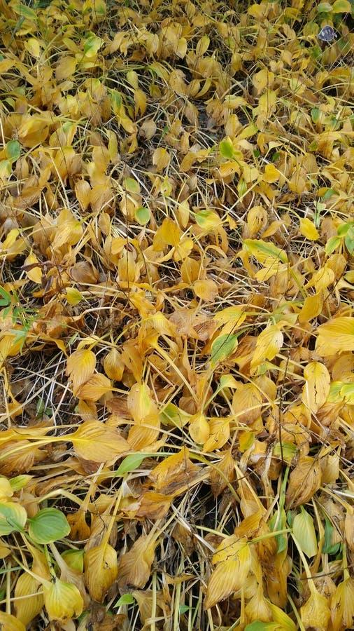 Folhas caídas em um parque imagem de stock