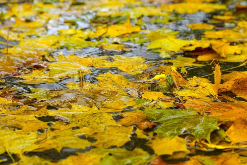 Folhas caídas na água imagem de stock