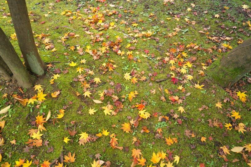 Folhas caídas no musgo em um jardim japonês no inverno adiantado no Tóquio foto de stock