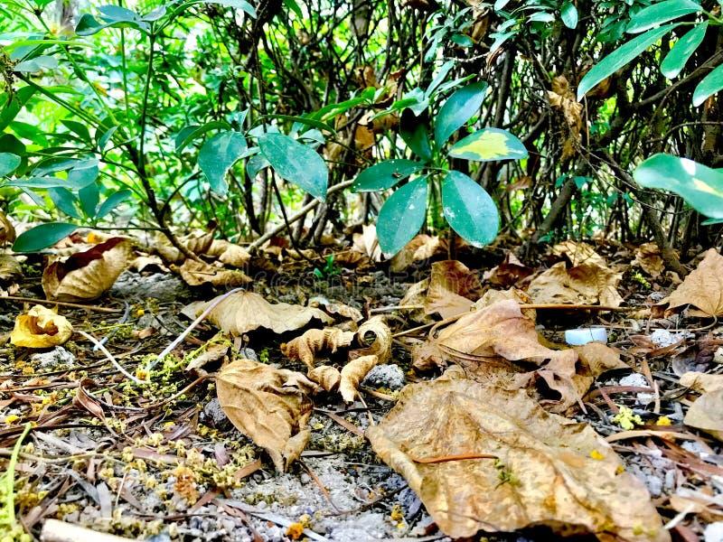 Folhas caídas no verão só imagens de stock royalty free