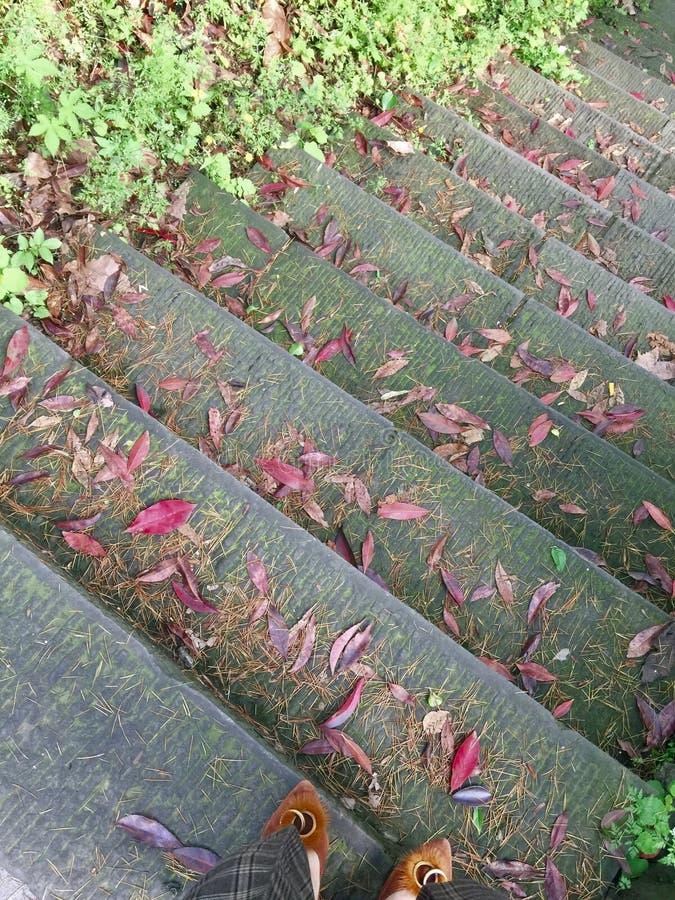 Folhas caídas vermelhas em etapas no parque imagem de stock