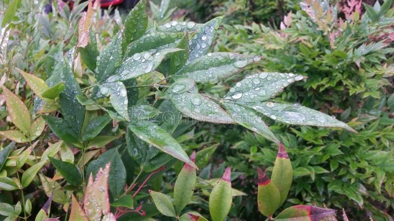 Folhas cobertas pingo de chuva fotografia de stock royalty free