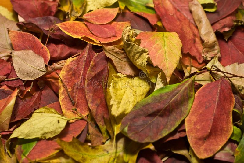 Autumn Beautiful Colored Leaves foto de stock