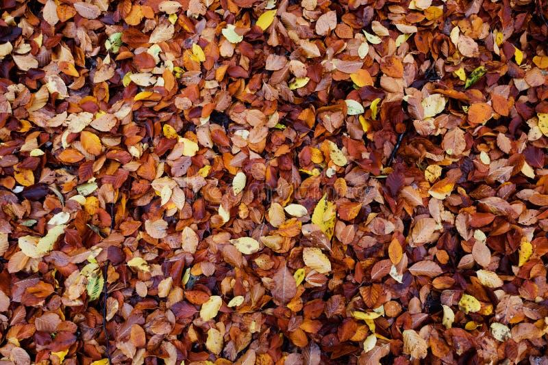 Folhas coloridas caídas fotos de stock royalty free