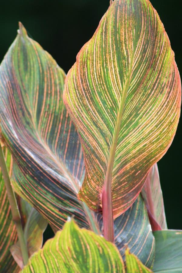 Folhas coloridas da mola imagem de stock
