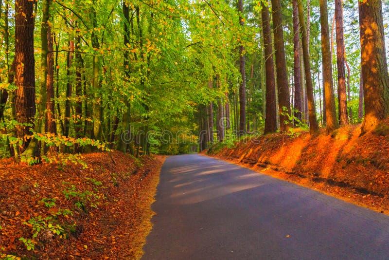 Folhas coloridas das árvores de floresta do outono das profundidades da estrada foto de stock royalty free