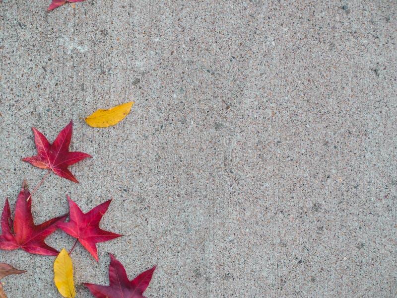 Folhas coloridas do autmun no assoalho concreto imagem de stock