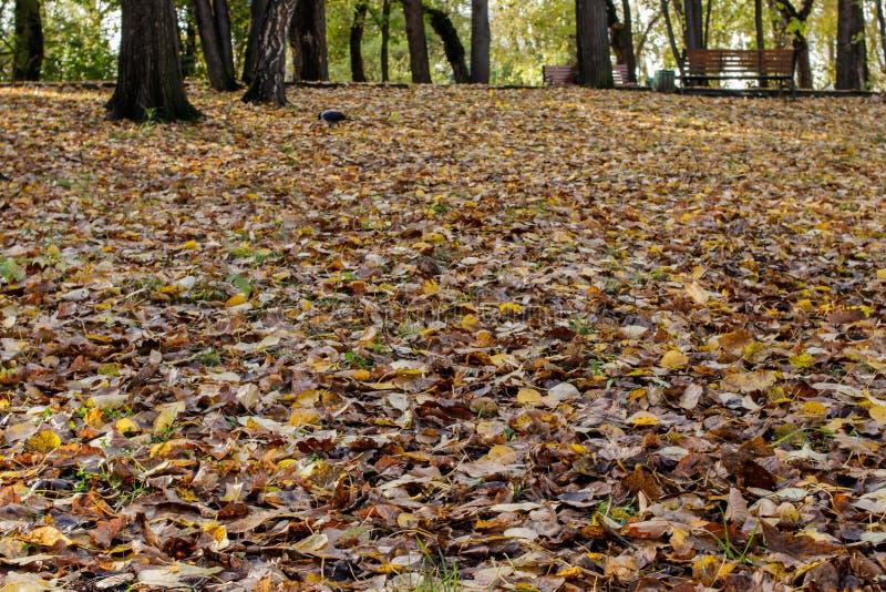 Folhas coloridas do outono deitado no chão de um parque antigo imagens de stock