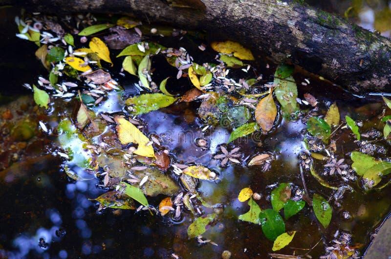 Folhas coloridas e flores que flutuam na água fotos de stock