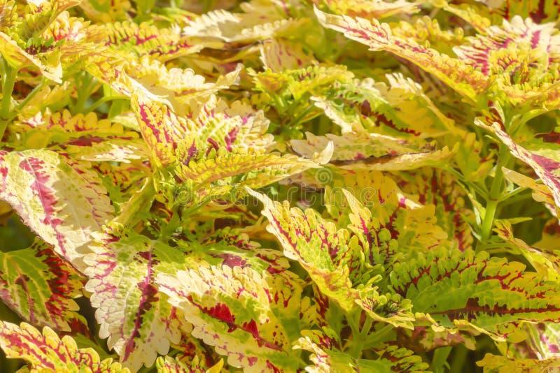 Folhas coloridas e luz do sol bonita da manhã fotos de stock