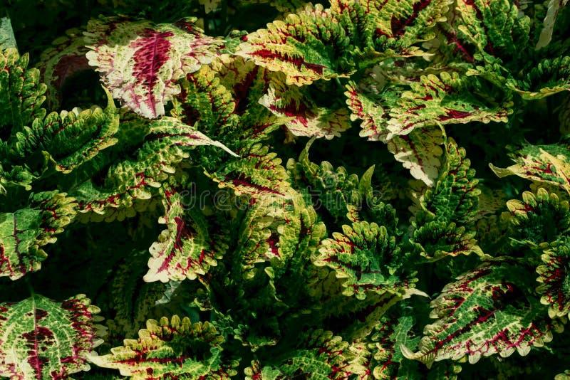 Folhas coloridas e luz do sol bonita da manhã imagens de stock