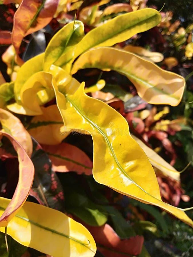 Folhas coloridas na árvore bonita fotos de stock