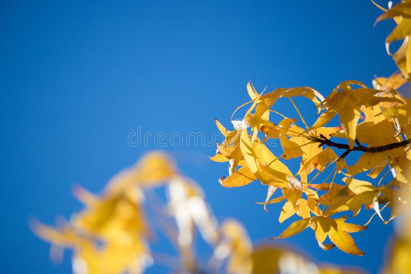 Folhas coloridas no outono, céu azul imagem de stock royalty free