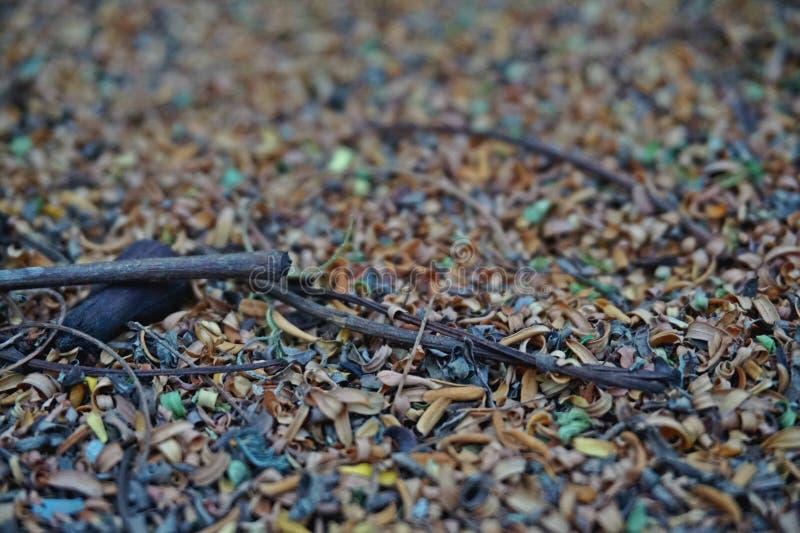 Folhas coloridas pequenas secas e alguma haste arborizado seca fotos de stock royalty free