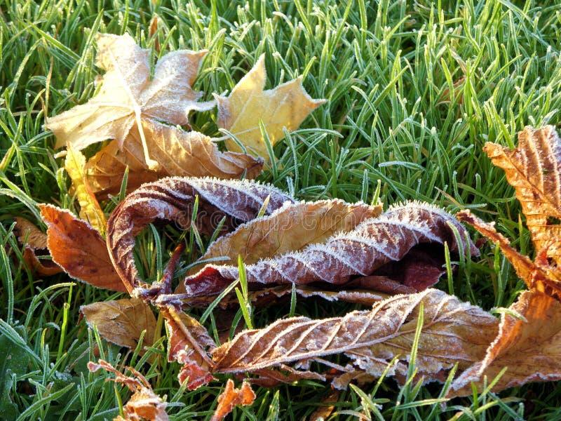Folhas com geada sobre imagem de stock