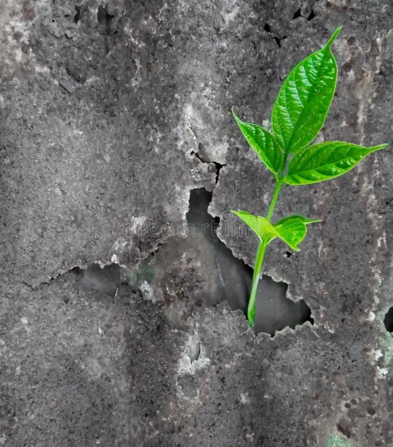 Folhas com zinco fotografia de stock