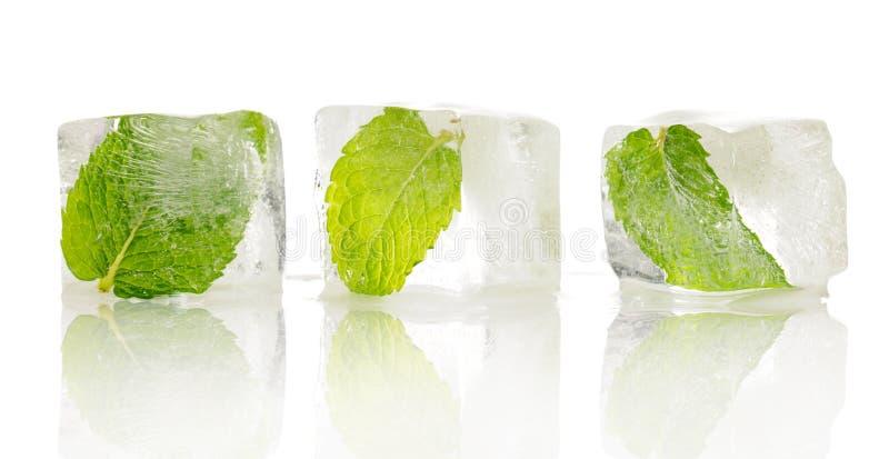 Folhas congeladas fotografia de stock