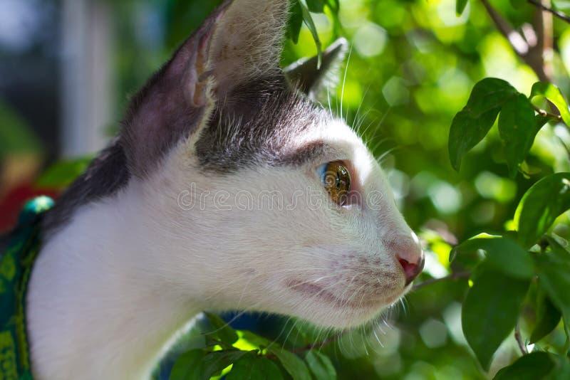 Folhas curiosas do olhar do gato imagem de stock