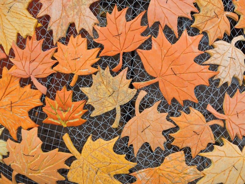 Folhas da árvore de bordo cortadas da pele da abóbora foto de stock royalty free