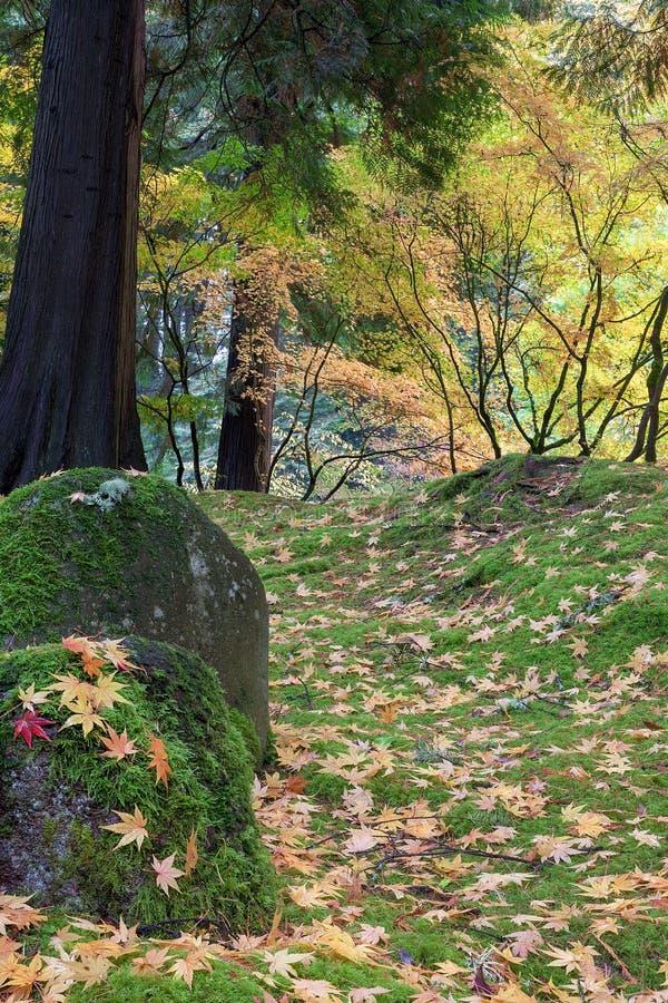 Folhas da árvore de bordo japonês no outono das rochas fotos de stock royalty free
