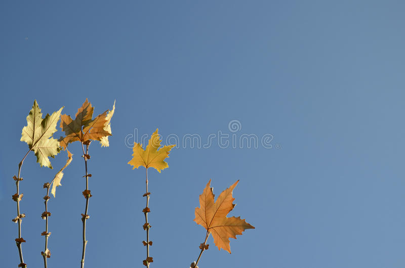 Folhas da árvore plana imagem de stock