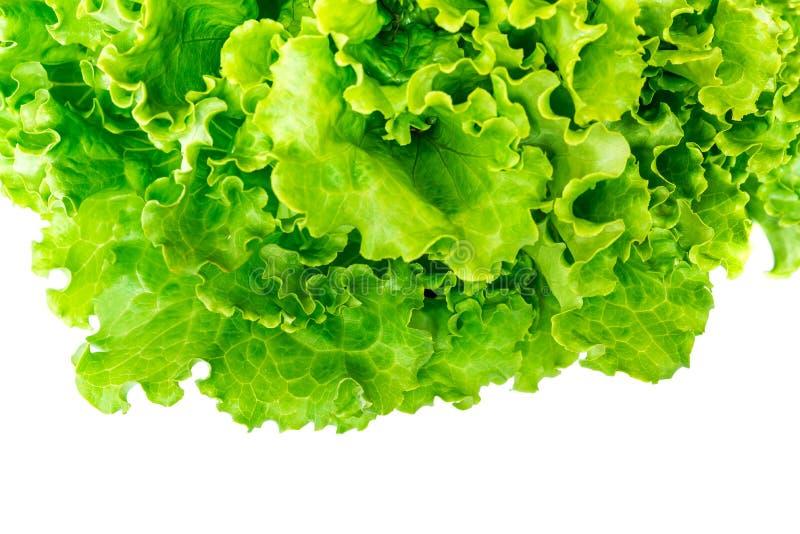 Folhas da alface isoladas no fundo branco fotografia de stock royalty free