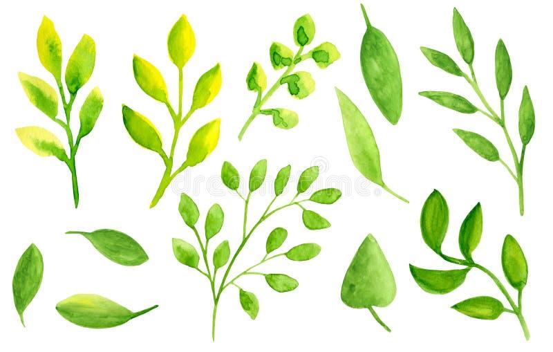 Folhas da aquarela ajustadas Elementos florais abstratos tirados mão isolados no fundo branco para o projeto, álbum de recortes,  ilustração stock
